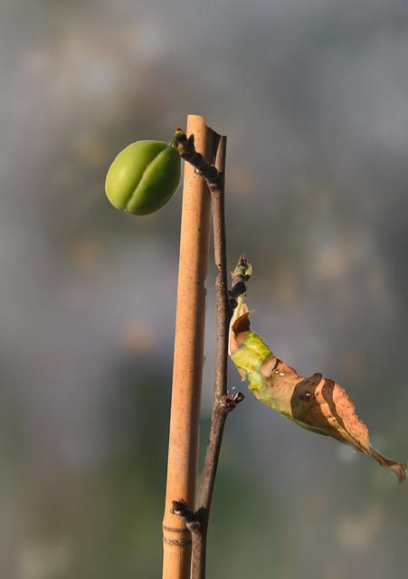 Delayed Fruit
