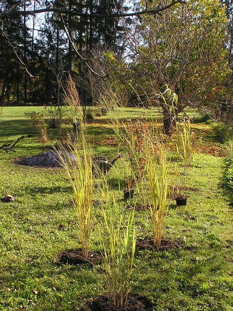 New Giant Grasses Corner