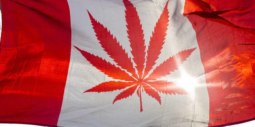 Cannabis : soulagement de la douleur sans «high»