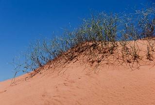 Dune vegetation... 20110622_8436