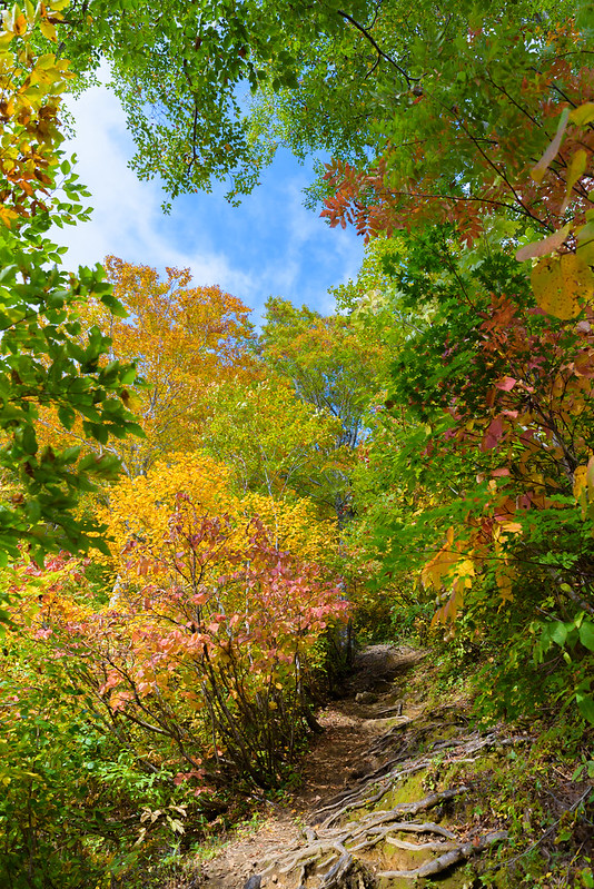 Climbing path of autumn leaves at Mt.Amakazari NAGANO 2018