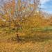 A Fine Fall Day