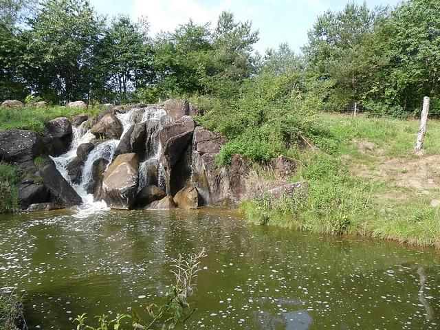 Außenanlage Gorillas, Zoo Givskud
