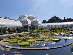 NYC Botanical Garden - Water Lilies & Lotuses