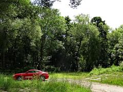 Der Morgen tut einen roten Schein in Sachsen im grünen Wald 00647