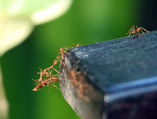 ants, Kanchanaburi, Thailand 2018