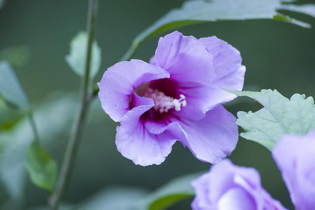 Flower_102618_06