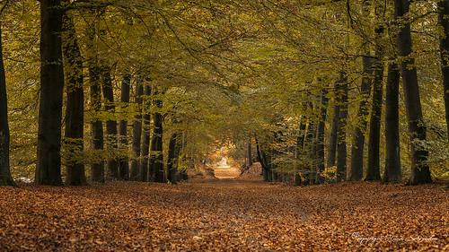 Autumn in Salland (2)