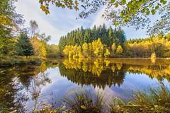 L'automne, Mille Etangs [France]