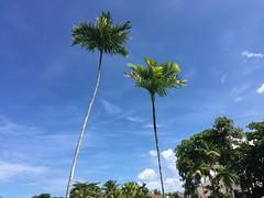 Be Live Marien Puerto Plata - Palmen / Palms