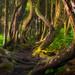 Botanic Crucible by Dylan Toh