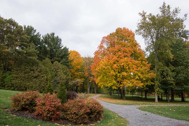 Automne, autumn - Parc du Bois-de-Coulonge, Québec, Canada - 7765