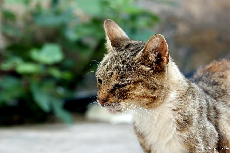 Кот на фоне зелени