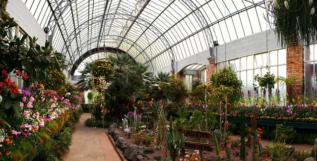 Panorama (stitched) Winter Garden, Auckland domain - New Zealand