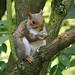31 Squirrel.