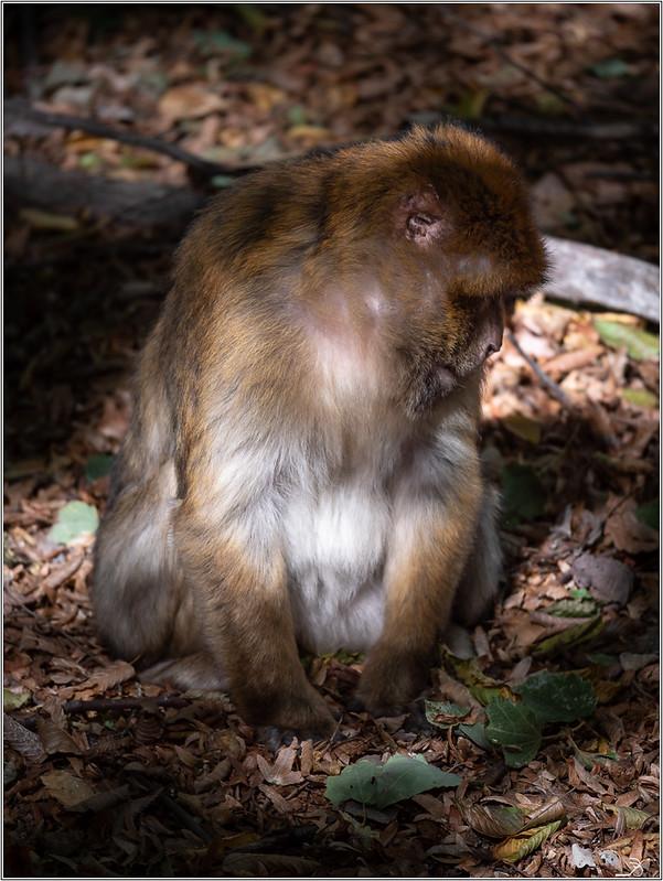 Terre des singes part3 44285347534_b7a8ebd703_c
