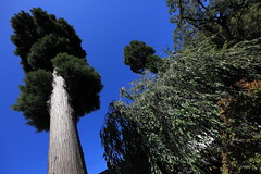 Tree / 木(き)