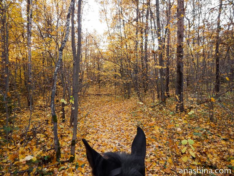 Золотой лес, Московская область