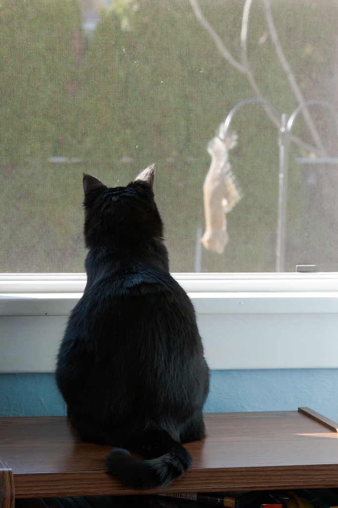 Our black cat Emma watches a squirrel at our suet feeder from the window in my office