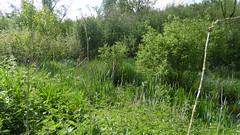 Site naturel du marais des crétes d'Athies (6)