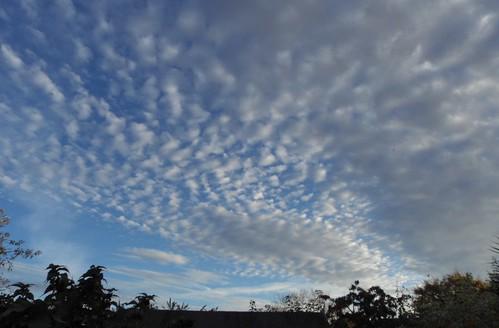 Cloud's