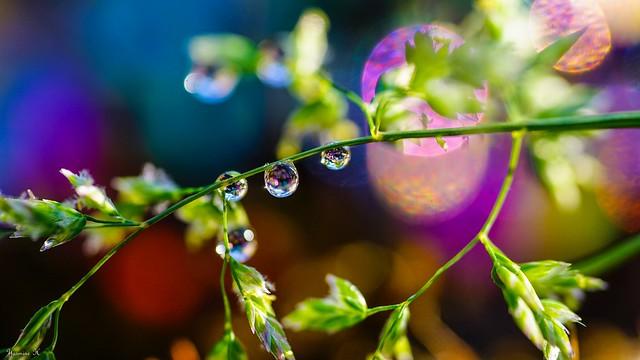 Droplets - 6037