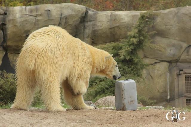 Besuch Zoo Rostock 20.10.201850