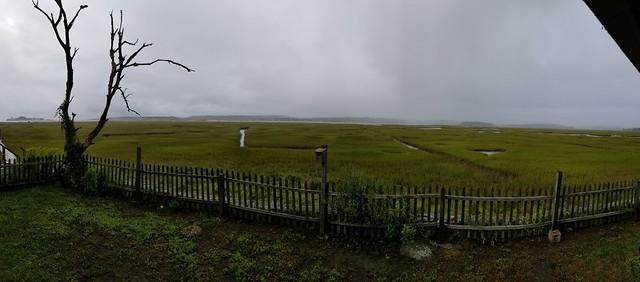 rainy marsh