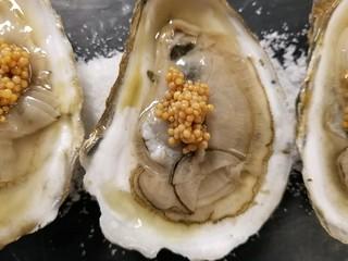 Damariscotta Oysters