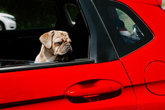 Dog Dienstag: Are we there yet?