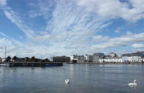 galway city urban river blue sky cloud swan beauty nature ireland coast building calm preening seagull bird