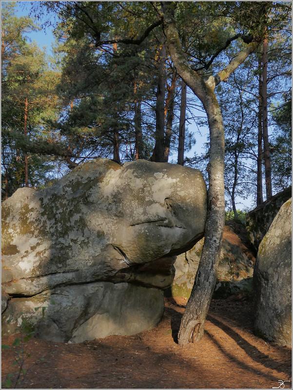 Fontainebleau Avon 44317354295_1d4e7fc1fd_c