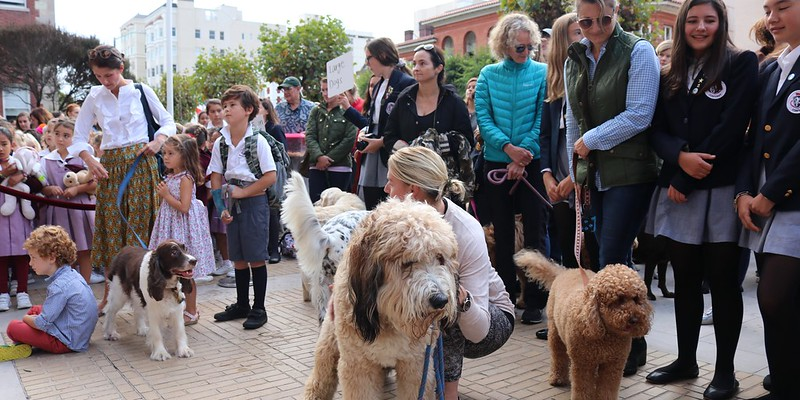 Feast of St. Francis Blessing of the Animals, Oct. 4, 2018