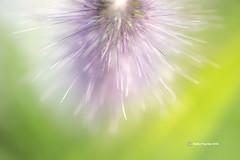 Seed macro 7112