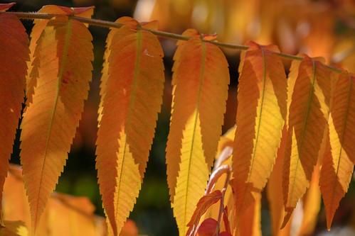 Autumn colours in York, 2018 - 5