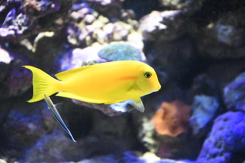 Aquarium Zella Mehlis