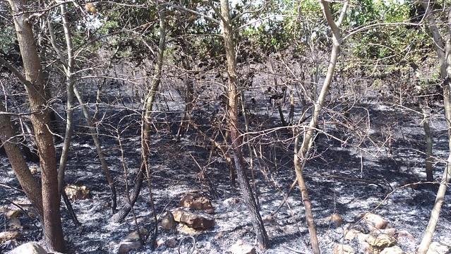 incendio boschivo gioia-acquaviva