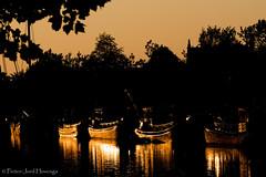Golden ships