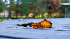 C'est l'automne 🍂