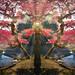 tree by Ryan Kimball