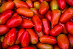 Closeup of Many Tomatoes