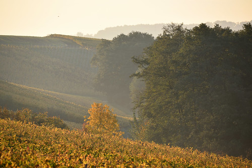 Ambiance brumeuse d'un matin d'automne