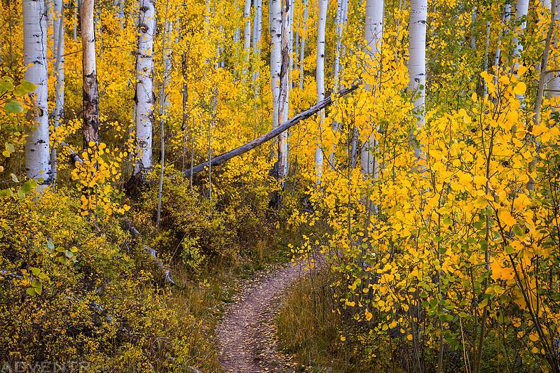 Trail Colors