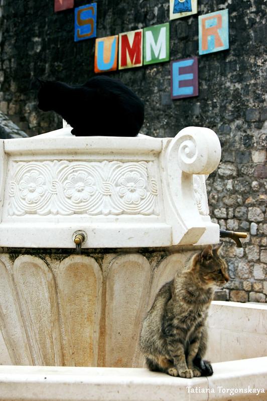 Коты, сидящие на фонтане