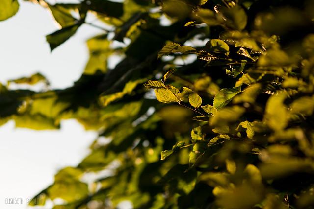 Wiener Wunderwelten, Nikon D5300, AF Nikkor 85mm f/1.8D