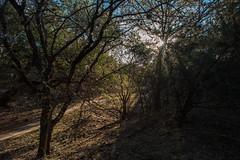 Forest - O. P. Schnabel Park - San Antonio - Texas - 10 December 2017