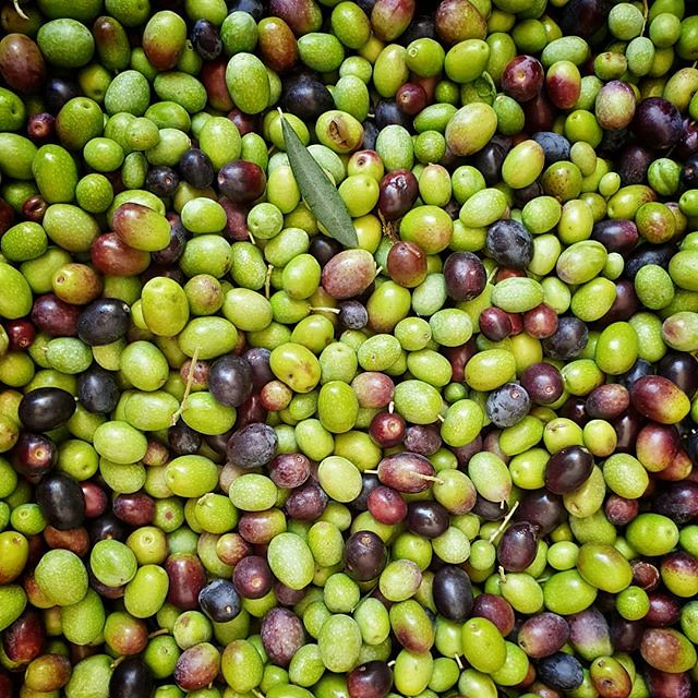 Olives #olives #green #oil #pattern #garda #gardasee #oil #photooftheday #picoftheday #igers #igersitalia #igersgarda #work #family #life #harvest #oliveharvest #autumn