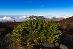 Haleakala Crater Hike Maui Hawaii plants