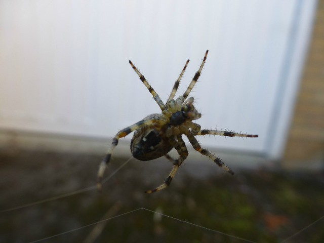 Spider - 5 October 2018, Panasonic DMC-TZ30