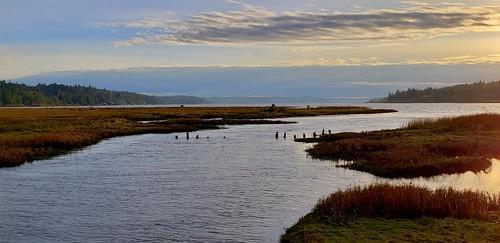 sunset thelerwetlands hoodcanal unionriver galaxys9 saltmarsh grass